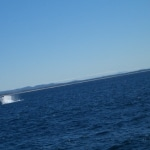 whale watching12
