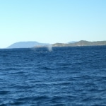 whale watching14