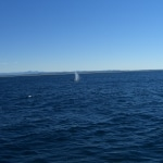 whale watching17