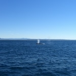 whale watching18