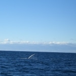 whale watching3