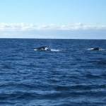 whale watching5