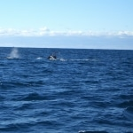 whale watching6