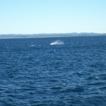 whale watching8
