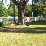 ibis_australis2