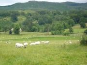 gita_nelle_highlands3