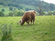 gita_nelle_highlands6