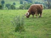 gita_nelle_highlands7