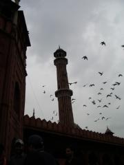 delhi_moschea_12