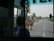 to_neemrana_19