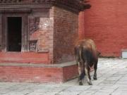 kathmandu_durbar_square_28