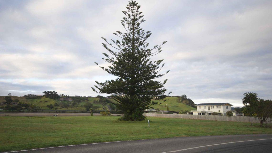 Taipa Auckland